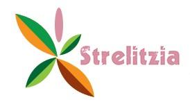 Магазин за цветя Стрелиция - Перник